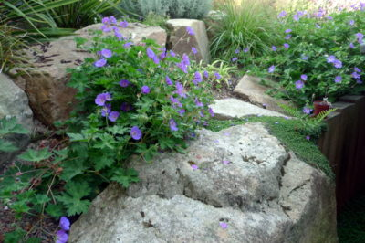Ameline Arbora Paysagiste fleur rocaille dinan
