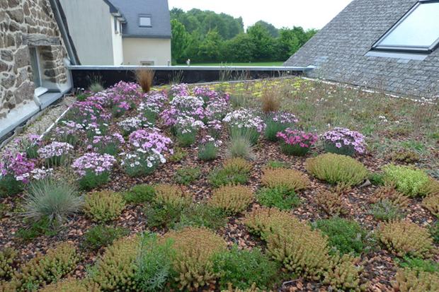 Ameline Arbra toiture végétale la vicomté sur rance