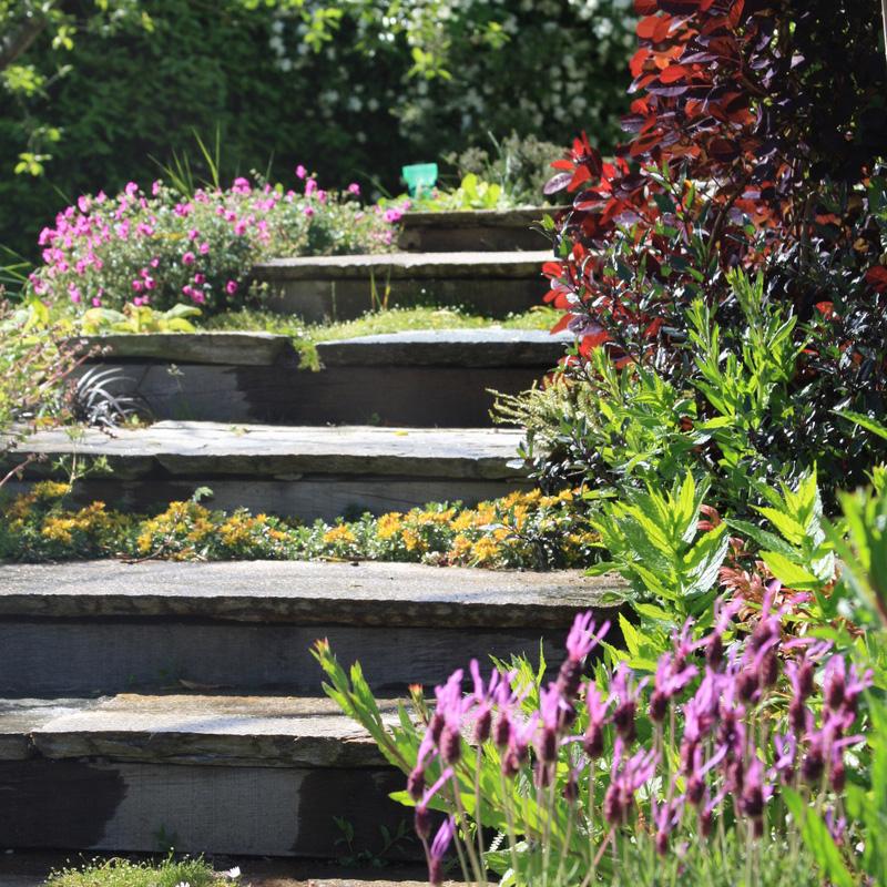 Ameline-Arbora-Escalier-Jardin